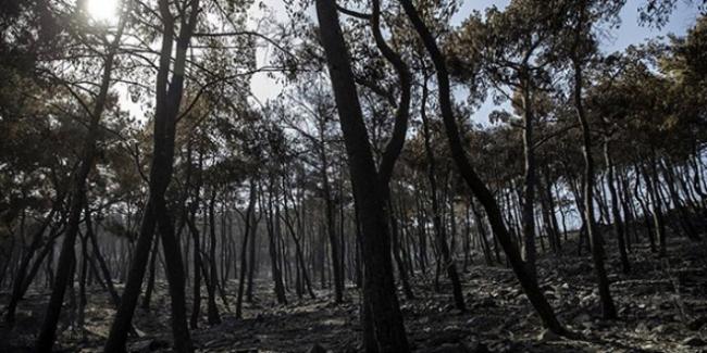 İnegölde 15 Eylüle kadar ormanlara giriş yasaklandı