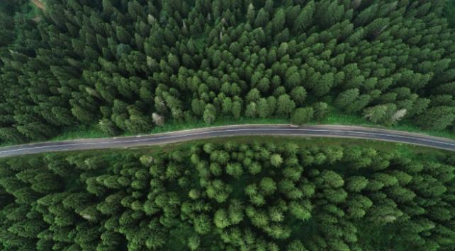 Ladin ormanlarını 65 bin böcek koruyacak