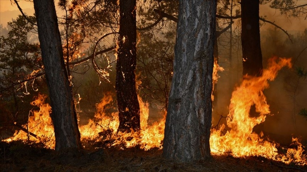 Bu yıl çıkan yangınlarda 4 bin 298 hektar orman alanı zarar gördü