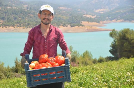 """Dede yadigarı tohumlardan yetişen """"Bulanık domatesi"""" üreticisini sevindiriyor"""