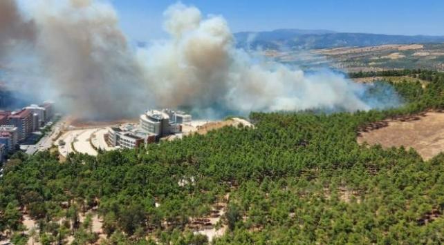 Hatayda orman yangını: 5 hektar alan zarar gördü