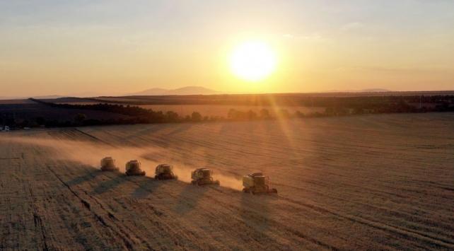Konya Ovasında verim ve fiyat artışı çiftçinin yüzünü güldürdü