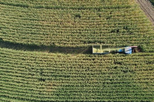Doğunun Çukurovasında silajlık mısır hasadı başladı