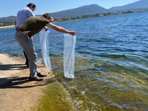 Beyşehirde göl ve göletlere 150 bin yavru sazan balığı bırakıldı