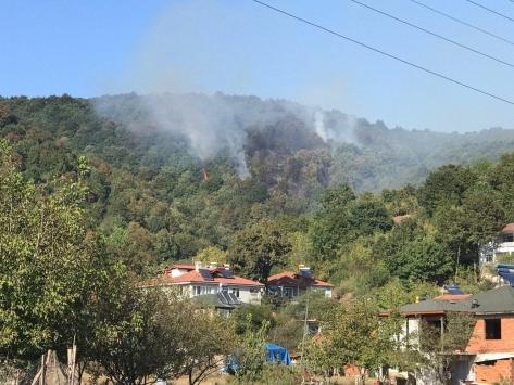 Sakaryada çıkan orman yangınına müdahale ediliyor