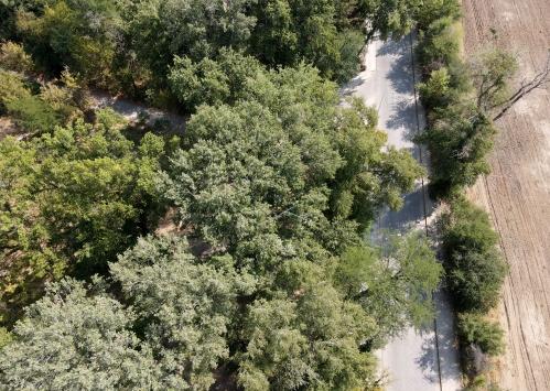 """Asırlık ağaçların gölgesindeki """"antik yolun"""" tescili turizmde hareketlilik beklentisi doğurdu"""