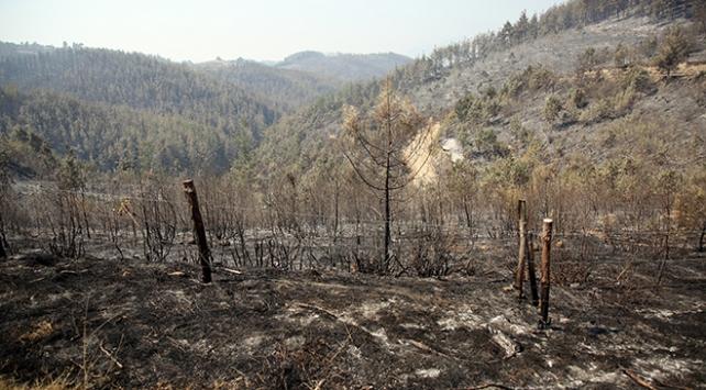 Adanada yanan orman yeniden yeşillendirilecek
