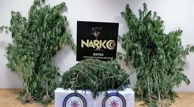 Samsunda 5 kilo 700 gram esrar ele geçirildi: 1 gözaltı