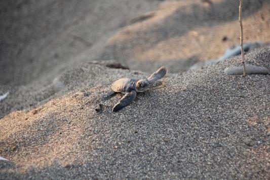 Mersinde deniz kaplumbağalarının yuvalama alanları temizlendi