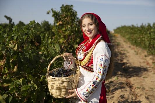 Edirnede üzüm hasadı başladı