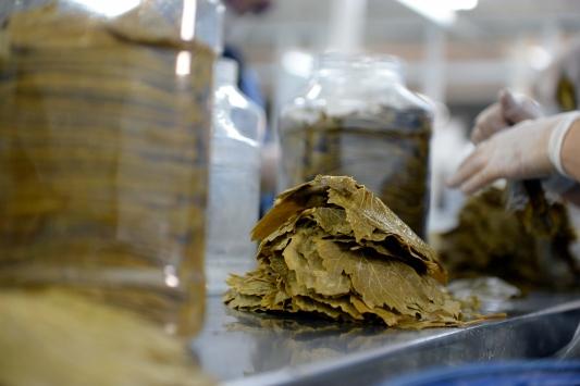 Erbaanın üzüm yaprağı yurt içi ve yurt dışında sofralara lezzet katıyor