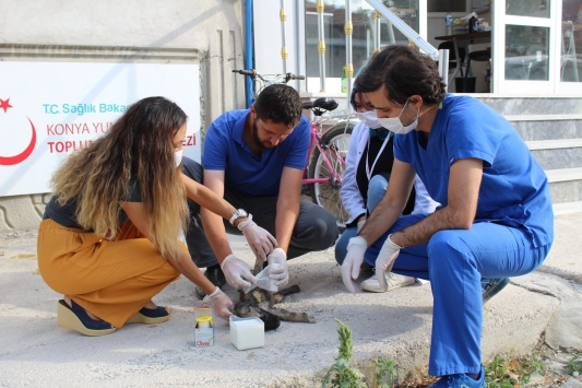 Konyada filyasyon ekipleri yaralı yavru köpek için seferber oldu
