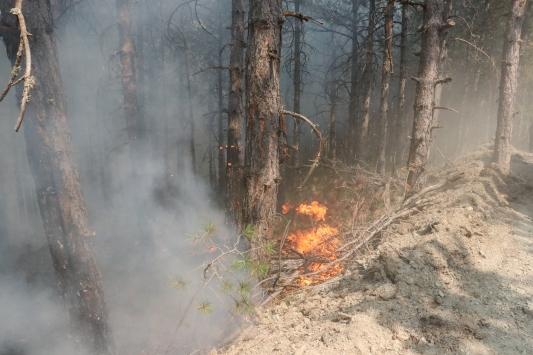 Kastamonudaki orman yangınını söndürme çalışmaları sürüyor