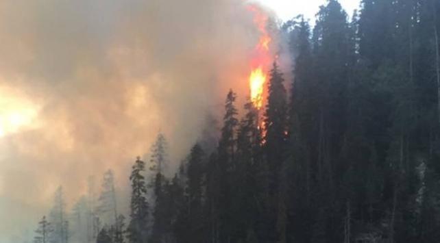 Artvinde çıkan yangında 4 hektar orman zarar gördü