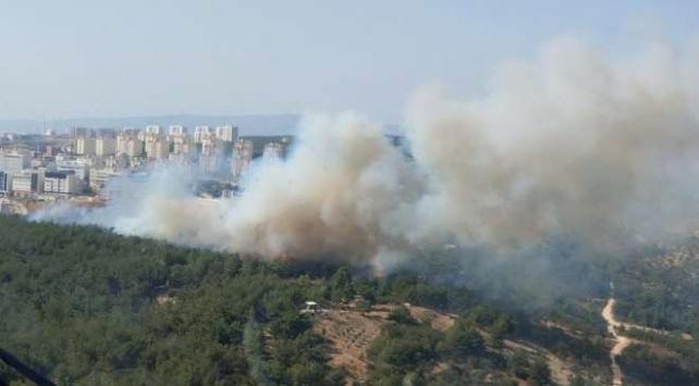 İzmirde ormanlık alanda yangın