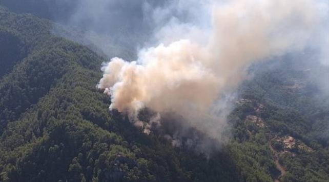 Antalyada ormanlık alanda yangın