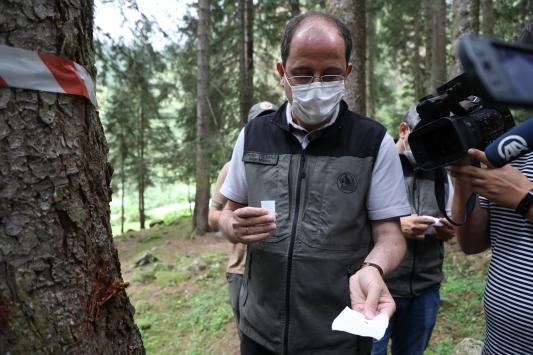 Karadenizdeki üç ilde ladin ormanlarını 40 bin faydalı böcek koruyacak