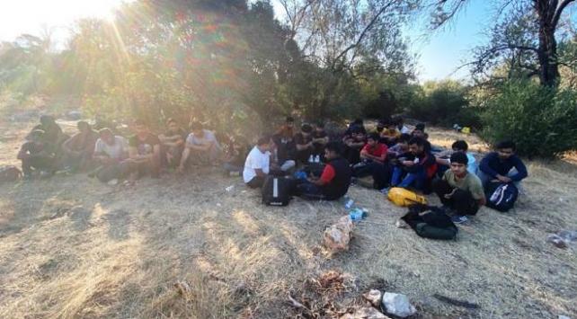 Antalyada zeytin bahçesinde 30 düzensiz göçmen yakalandı