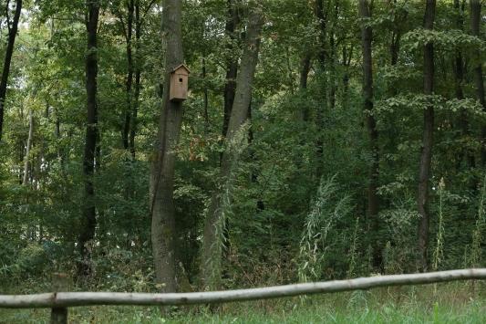 Kuş yuvasını mesken tutan sincap ailesi ilgi çekiyor