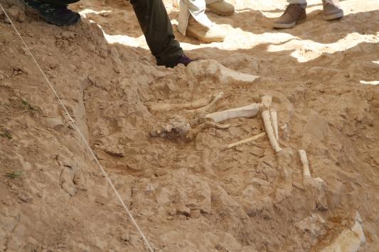 Kayserideki kazılarda yeni tür fosillere ulaşıldı