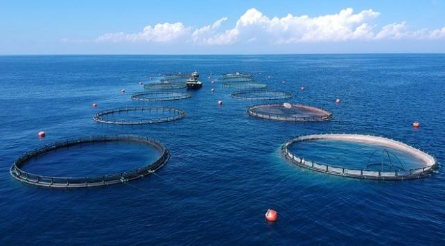 Doğu Karadenizden 73 milyon dolarlık su ürünleri ihracatı