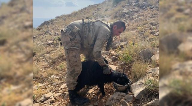 Mehmetçik dağda susuz kalan oğlağa miğferinden su içirdi