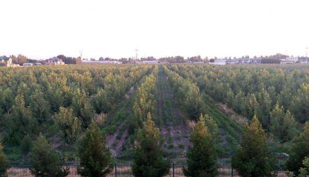 Özbekistanın yeni meyve bahçelerinin kurulumu Türk uzmanlara emanet