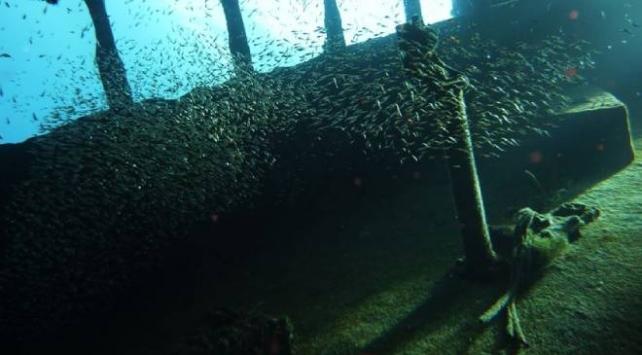 Kassam Tugayları: Batık iki İngiliz gemisinde yüzlerce mühimmat bulduk