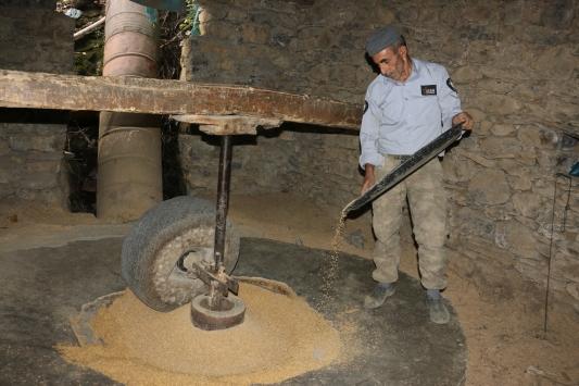 Bitliste yetiştirilen kursunç pirinci 150 yıllık değirmende öğütülüyor