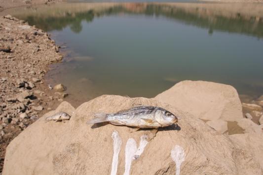 Mersinde balık ölümlerinin yaşandığı gölette inceleme başlatıldı