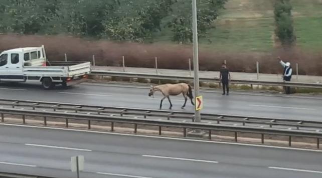 Başı boş at trafiği birbirine kattı