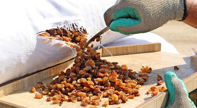 TMO 10 günde 10 bin tonun üzerinde kuru üzüm alımı yaptı
