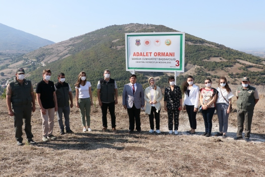 Samsunda hükümlüler 465 bin metrekarelik alana fidan dikti