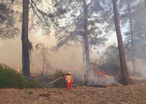 Antalyada seralara da sıçrayan orman yangınına müdahale ediliyor