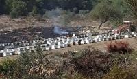 Muğla'da çıkan orman yangınında arı kovanları zarar gördü