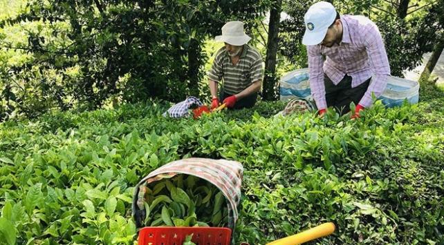 8 ayda 10,77 milyon dolarlık çay ihracatı