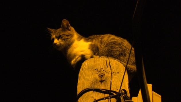 Sivasta telefon direğinin tepesinde mahsur kalan kediyi itfaiye kurtardı