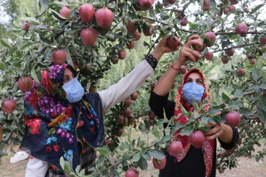 Devlet desteğiyle çeşitlendirdiği baba yadigarı bahçesinde tonlarca meyve üretiyor