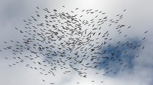 Gökyüzü leyleklerin vedasıyla şenlendi
