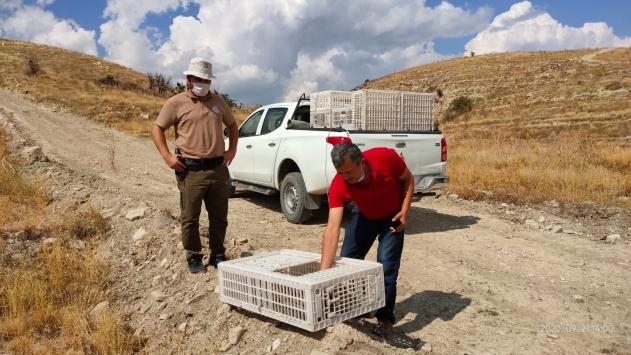 Antalyada 1025 kınalı keklik doğaya bırakıldı