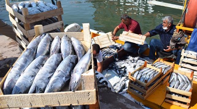 Balıkçılar limana kasa kasa palamutla dönüyor