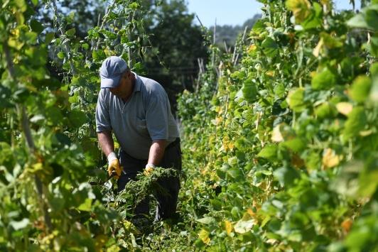Antalyanın yöresel Çandır fasulyesinin üretimi 3 yılda 15 kat arttı