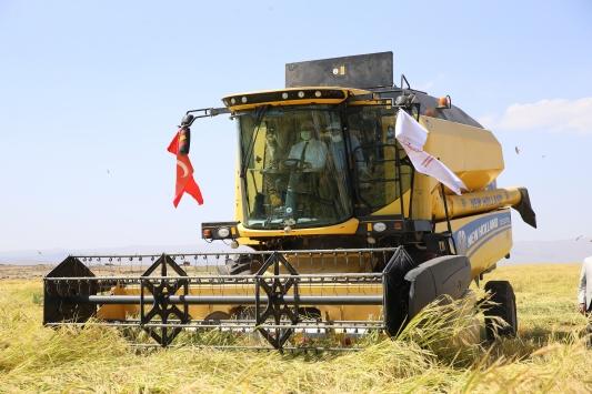 Diyarbakırın tescilli Karacadağ pirincinde hasat başladı
