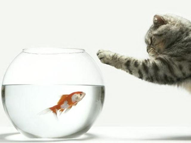 Küçük Balık Büyük Balık Sayesinde Kurtuldu