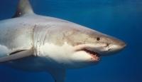 Avustralya'da Köpekbalığı Vahşeti