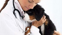 Köpekler Bu Sefer Tıbbın Hizmetinde