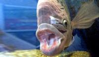 Balığa Bile Rejim Yaptırıyorlar