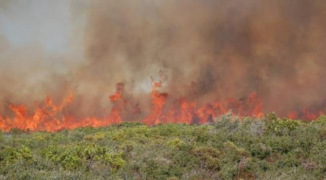 Aydındaki yangında 30 hektarlık makilik alan zarar gördü
