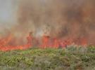Aydın'daki yangında 30 hektarlık makilik alan zarar gördü