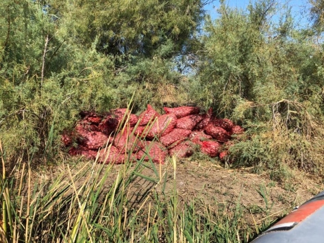Edirnede kaçak 5 ton kum midyesi ele geçirildi